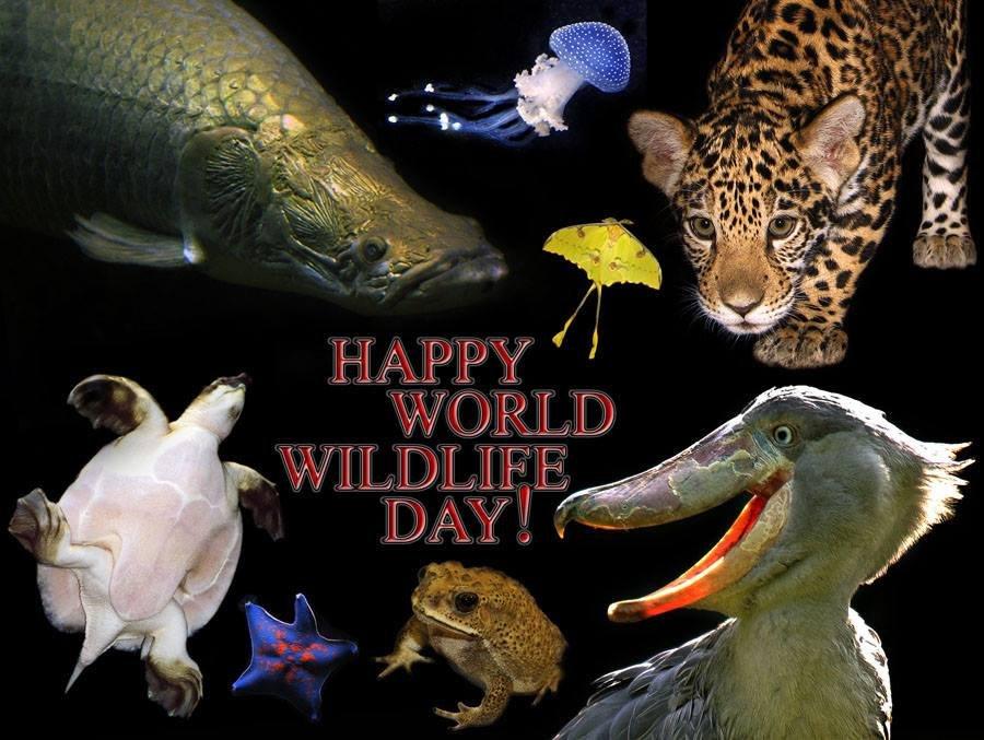 День дикой природы поздравления
