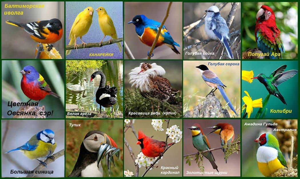 Международный день птиц картинки