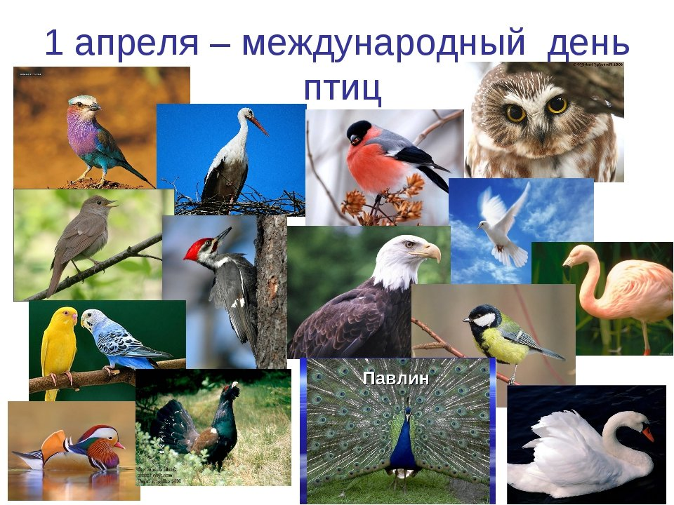 картинки к 1 апреля день птиц